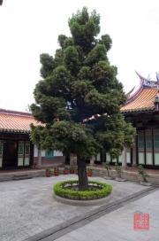 Taiwan 2012 - Taipei - Konfuziustempel - Baum
