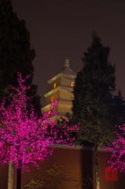 Xian 2013 - Giant Wild Goose Pagoda & LED Tree by Night