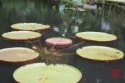 Malaysia 2013 - Penang - Spice Garden - Lotus