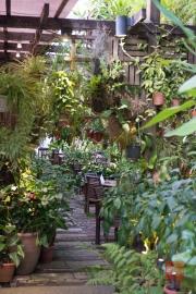 Malaysia 2013 - Penang - Ferrenghi Garden