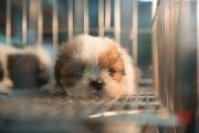 Taiwan 2013 - St. Raohe Night Market - Puppy