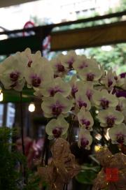 Taiwan 2012 - Taipei - Jianguo Holiday Flower Market - Weiße Orchideen
