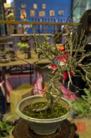 Taiwan 2012 - Taipei - Jianguo Holiday Flower Market - Bonsai IV