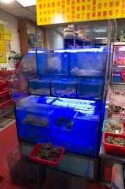 Taiwan 2012 - Taipei - Snake Alley - Schildkröten