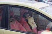 Beijing 2013 - Car seats