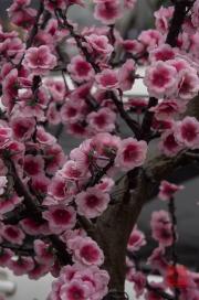 Pingyao 2013 - Fake flowers