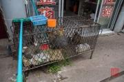 Dazu 2013 - Cage housing