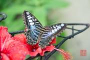 Malaysia 2013 - Butterfly Farm - Black-Blue-White