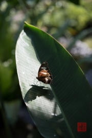Malaysia 2013 - Butterfly Farm - Sunbathing