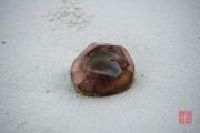 Malaysia 2013 - Hotel Beach - Coconut