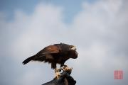 Photokina 2014 - Bird Show I