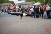 Photokina 2014 - Bird Show II