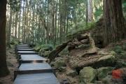 Taiwan 2015 - Alishan - Path III