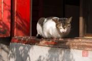 Hanoi 2016 - Cat