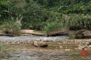 Phong Nha 2016 - River V