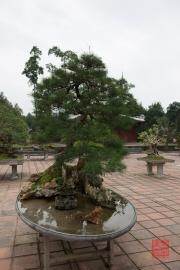 Hue 2016 - Bonsai